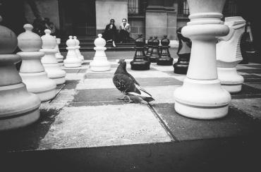 SITHOM 4 - Checkmate, Pigeon
